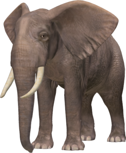 Elephant Png Png Image Download 1 Png 5420 Free Png Images Starpng Three species are recognised, the african bush elephant (loxodonta africana), the african forest elephant (l. elephant png png image download 1