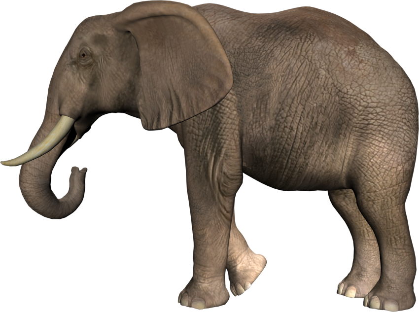 Elephant Png Transparent Background Image For Free Download 3 Png 5435 Free Png Images Starpng Search more hd transparent elephant image on kindpng. elephant png transparent background