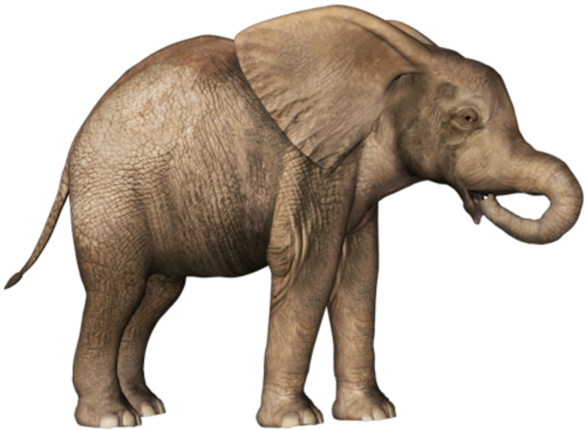 Elephant Png Transparent Background : Free for commercial use no attribution required high quality images.