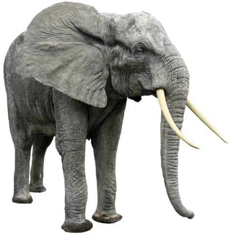 Elephant Png Transparent Background Image For Free Download 6 Png 5438 Free Png Images Starpng All images and logos are crafted with great workmanship. elephant png transparent background