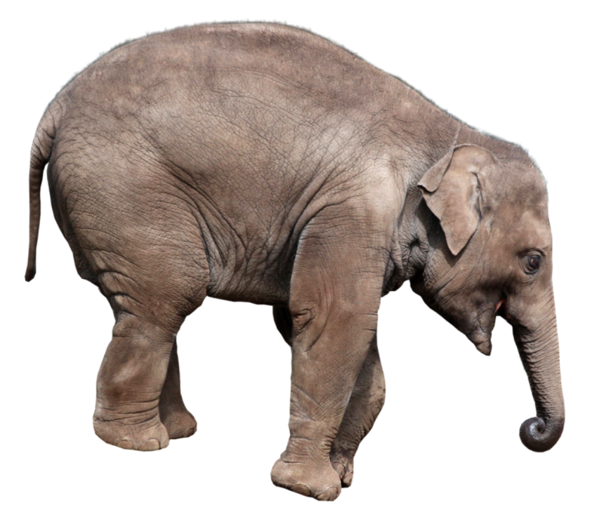 Elephant Png Transparent Background Image For Free Download 9 Png 5440 Free Png Images Starpng If you like, you can download pictures in icon format or directly in png image format. elephant png transparent background